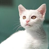 Adopt A Pet :: Baby - Coronado, CA