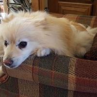 Adopt A Pet :: Remy - Studio City, CA