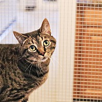 Adopt A Pet :: Frankie Juan - Lincoln, NE