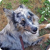 Adopt A Pet :: Gus - Washington, IL