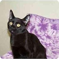 Adopt A Pet :: Piper - Secaucus, NJ