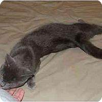 Adopt A Pet :: Anastasia - East Tawas, MI