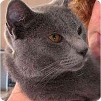 Adopt A Pet :: Ari - Davis, CA