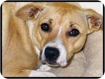 Hound (Unknown Type) Mix Dog for adoption in Macon, Georgia - Rosie