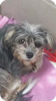 Terrier (Unknown Type, Small) Mix Dog for adoption in Philadelphia, Pennsylvania - Annabell