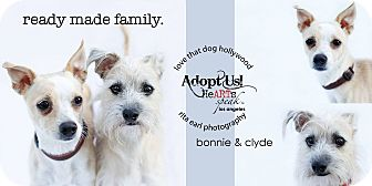 Terrier (Unknown Type, Small) Mix Dog for adoption in Los Angeles, California - Clyde