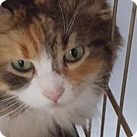 Adopt A Pet :: Callie - Chesterfield, VA