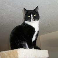 Adopt A Pet :: Princess - Lacon, IL