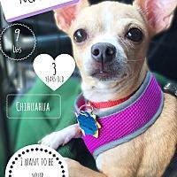 Adopt A Pet :: Mariah - Indianapolis, IN
