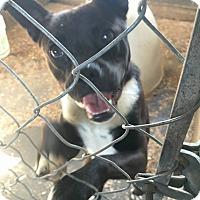 Adopt A Pet :: Seth - Blue Bell, PA