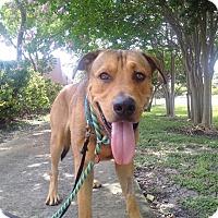 Adopt A Pet :: Noah - Ft. Lauderdale, FL
