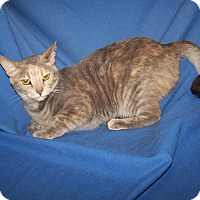 Adopt A Pet :: Carmen - Colorado Springs, CO