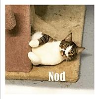 Adopt A Pet :: Nod - Mission, BC
