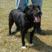 Adopt A Pet :: Toby - Dublin, GA