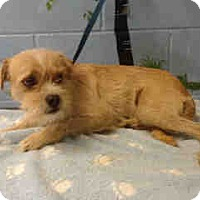 Adopt A Pet :: URGENT ON 7/18  San Bernardino - San Bernardino, CA