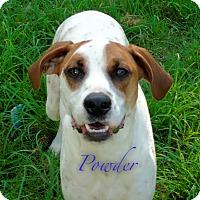 English Pointer/Mixed Breed (Medium) Mix Dog for adoption in Okmulgee, Oklahoma - Powder