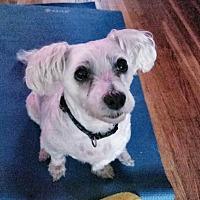 Adopt A Pet :: Nemo D3791 - Shakopee, MN