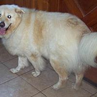 Adopt A Pet :: Buddy - newfoundland, PA