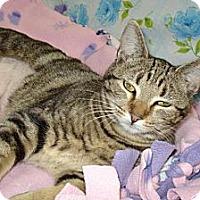 Adopt A Pet :: Dolly - St. Louis, MO