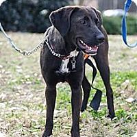 Adopt A Pet :: Gypsy - Cumming, GA