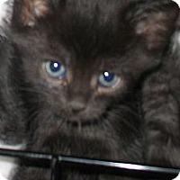 Adopt A Pet :: Chiquita - Acme, PA
