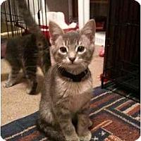 Adopt A Pet :: Elliston - Arlington, TX