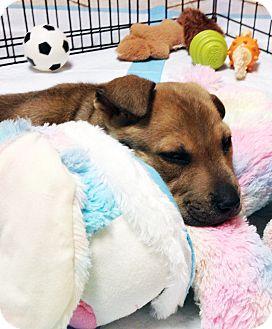 German Shepherd Dog/Shar Pei Mix Puppy for adoption in New Braunfels, Texas - Tyler
