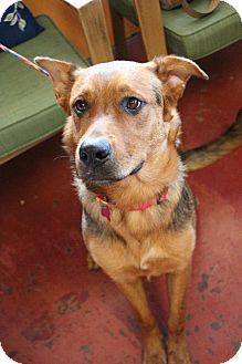 Shepherd (Unknown Type) Mix Dog for adoption in New Orleans, Louisiana - Berlin