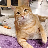 Adopt A Pet :: Kobe - Foothill Ranch, CA