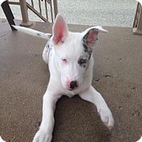 Adopt A Pet :: Spike - Denver, IN