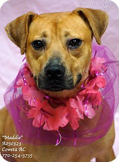 Black Mouth Cur/Terrier (Unknown Type, Medium) Mix Dog for adoption in Newnan City, Georgia - Maddie