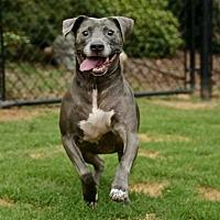 Adopt A Pet :: Boone - Newnan, GA