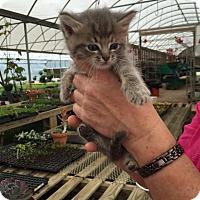 Adopt A Pet :: Puff - McDonough, GA