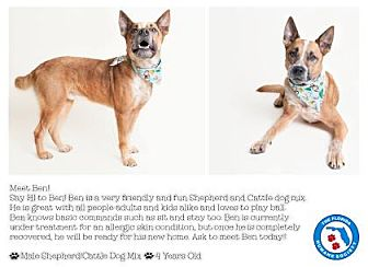 Australian Cattle Dog Mix Dog for adoption in Pompano Beach, Florida - Ben
