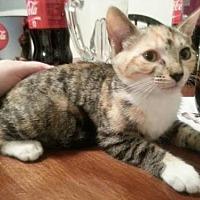 Adopt A Pet :: Susan - Hudson, FL