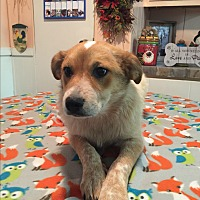 Adopt A Pet :: Dixie - Kittery, ME