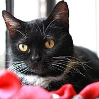 Adopt A Pet :: MISTY - Kyle, TX