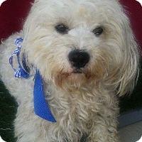 Adopt A Pet :: JASPER - Corona, CA