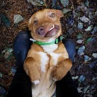 Adopt A Pet :: Picasso - Eugene, OR