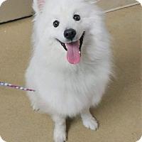 Adopt A Pet :: Cotton - Ogden, UT