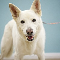 Adopt A Pet :: Rhea - Van Nuys, CA