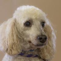 Adopt A Pet :: Beta - Colorado Springs, CO