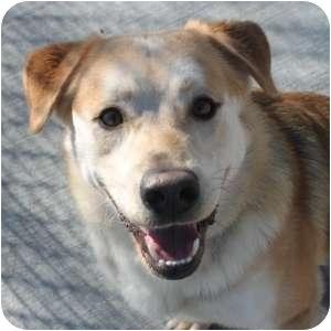 Retriever (Unknown Type) Mix Dog for adoption in Naperville, Illinois - Benjamin