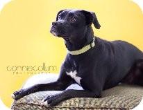 Terrier (Unknown Type, Medium)/Boxer Mix Dog for adoption in Birmingham, Alabama - Diamond