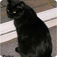 Adopt A Pet :: Puma - Catasauqua, PA