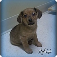 Adopt A Pet :: Ryleigh - Southport, NC
