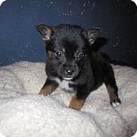 Adopt A Pet :: Yasmin - Westbank, BC