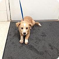 Adopt A Pet :: Shiloh - Lancaster, VA