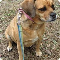Adopt A Pet :: Miskey - Jacksonville, FL