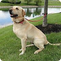 Adopt A Pet :: Hunter - Lewisville, IN